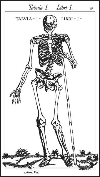 Cheskin skeleton